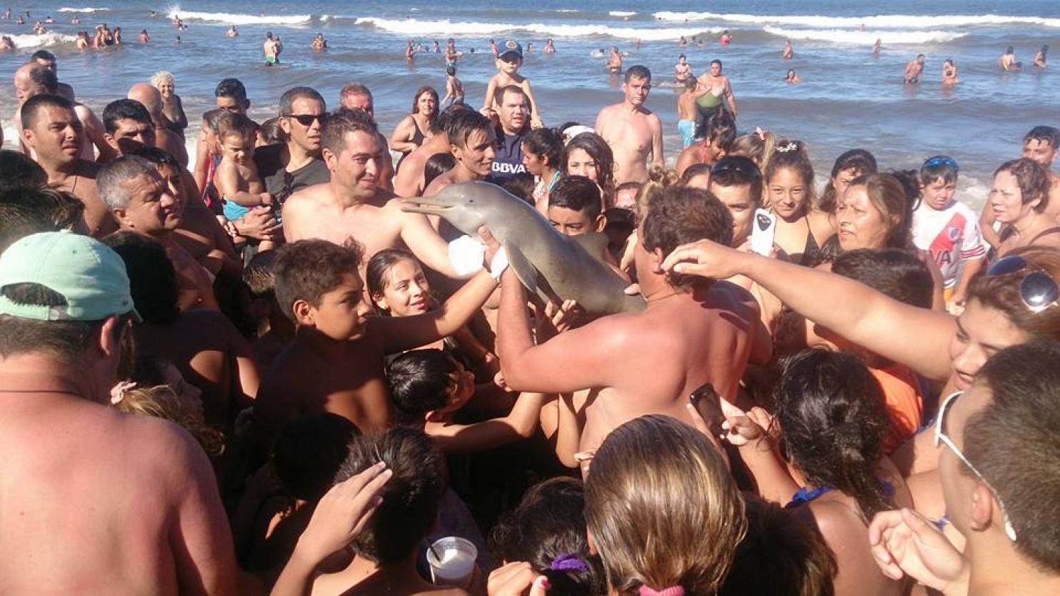 Megölték a kisdelfint