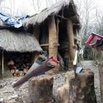 Hajláktalan palotája az erdőben