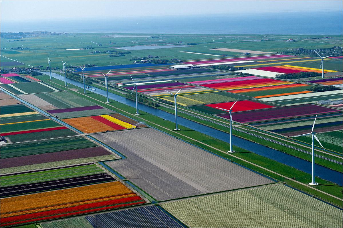 Tulipánföldek Hollandiában