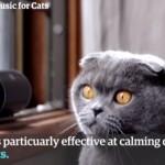 Zene macskáknak