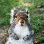 A kép csak illusztráció. Egyáltalán nem biztos, hogy ez a mókus volt a támadó.