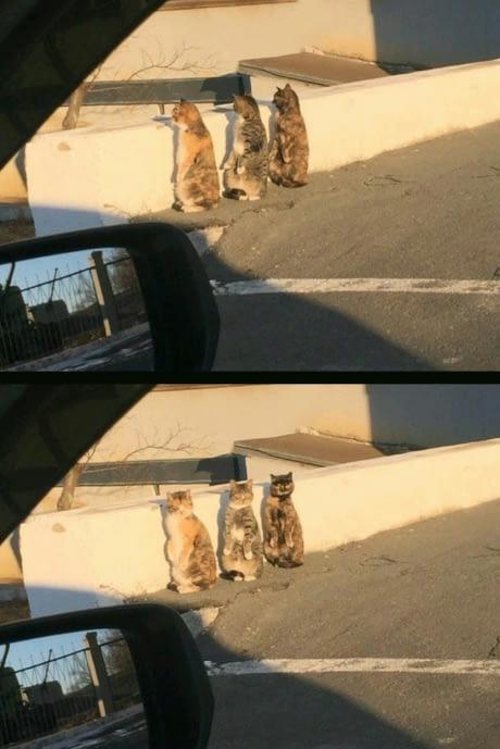 Nagyon vicces macskás kép